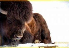 02 Tierpark Uruz