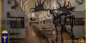 15 Algiz Jagdmuseum