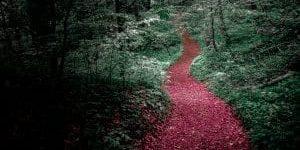 Losnaechte Wald