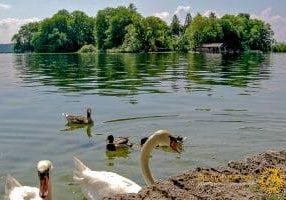 Die Roseninsel vom Feldafinger Ufer aus gesehen.